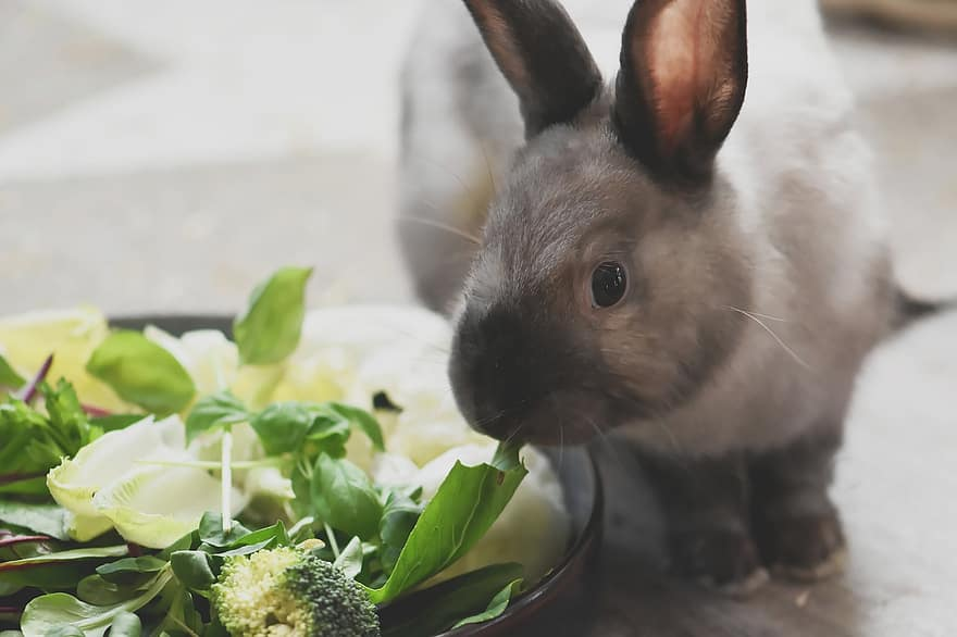 rabbit eating broccoli