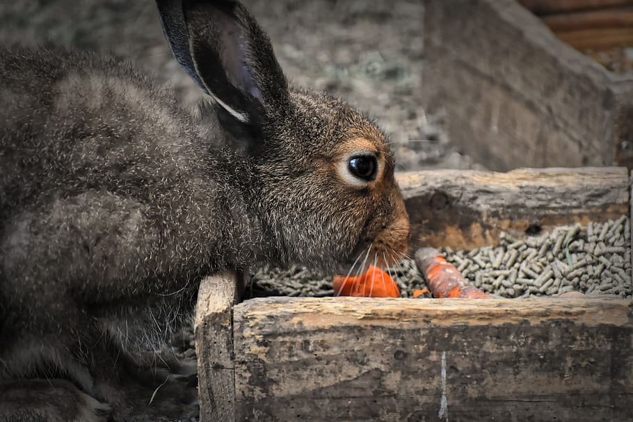 rabbit eating kibbles and carrots