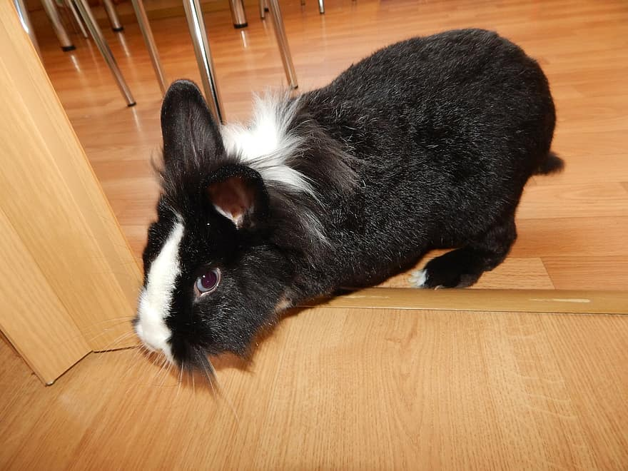 rabbit on the floor