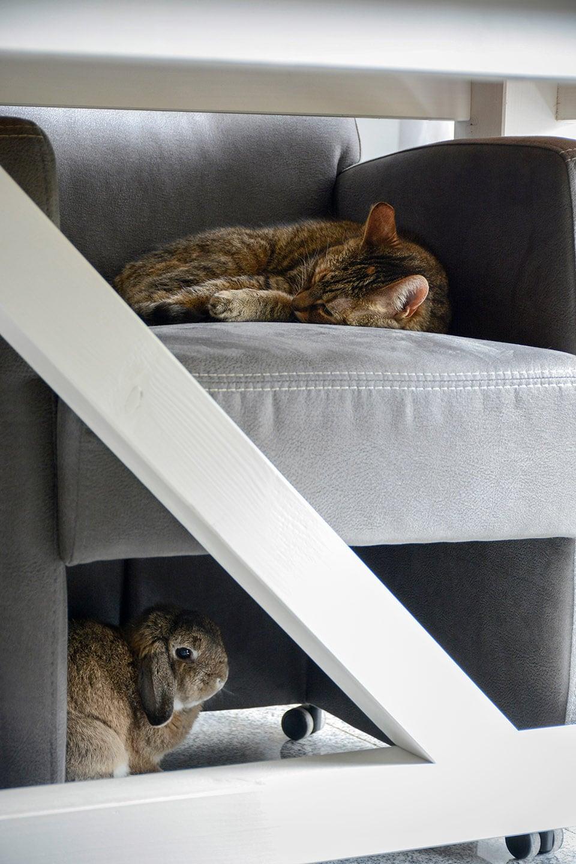 rabbit under the chair