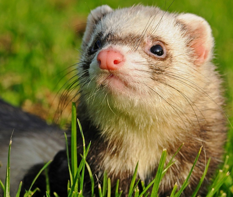 Ferret Overview