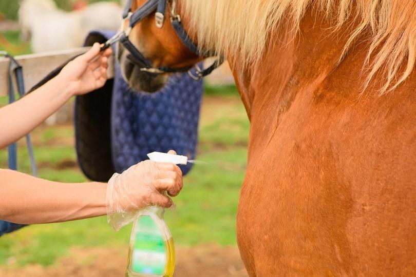 anti-insect repellent for_IRINA ORLOVA_shutterstock