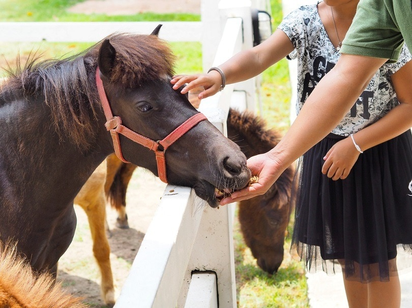 man feeding horse treat_touristgirl_shutterstock