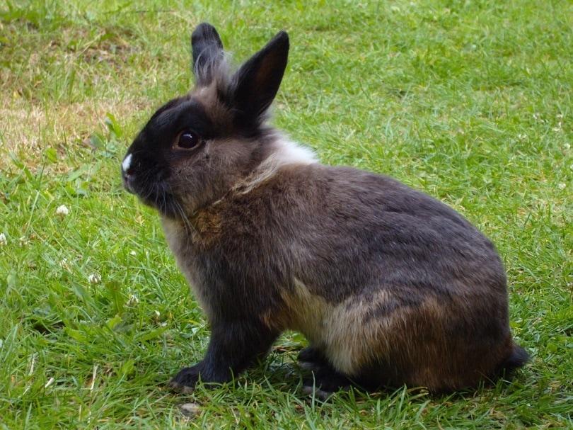 rabbit_MichaelSofT_shutterstock