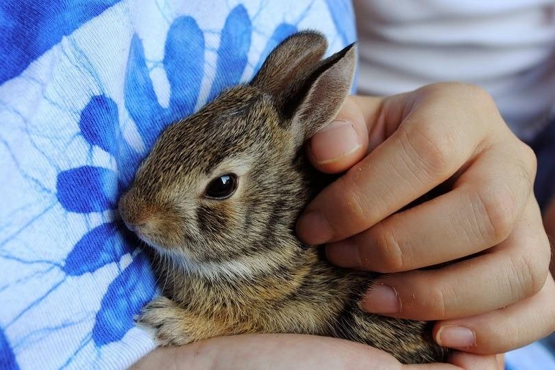 bunny-pixabay