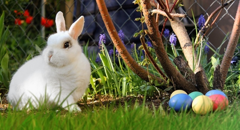 easter-rabbit-pixabay