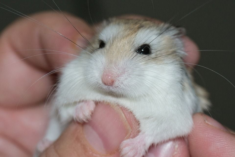 hand holding a hamster