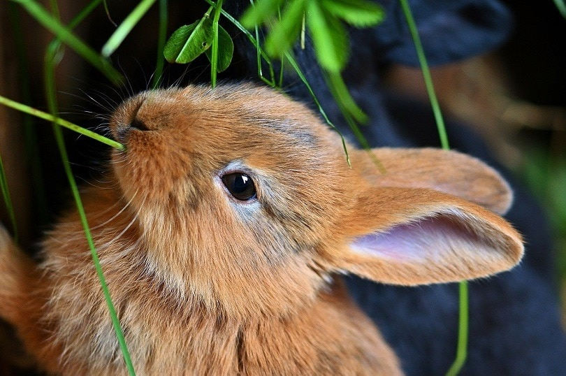 hare-pixabay