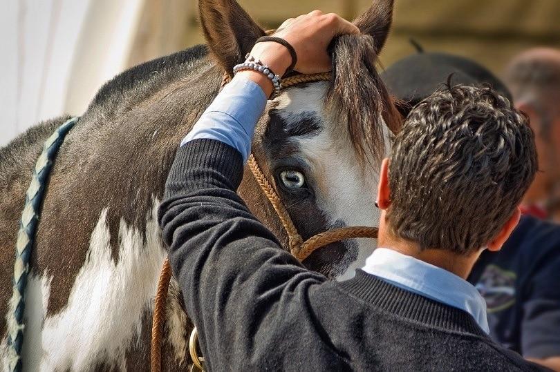 horse-bonding-pixabay