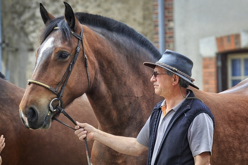 horse-pixabay