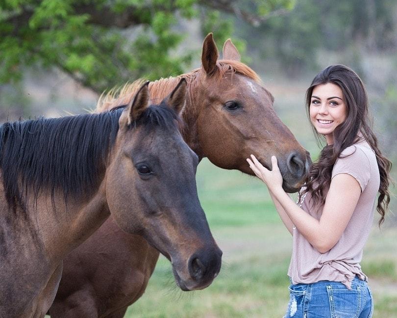 horses-pixabay