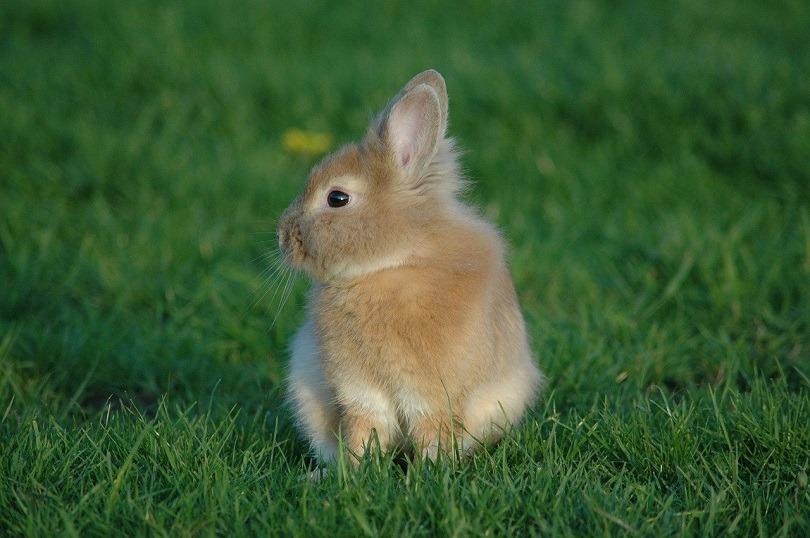 prairie-rabbit-pixabay
