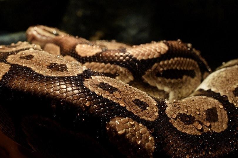 python-pixabay