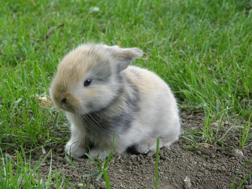 rabbit-baby-pixabay