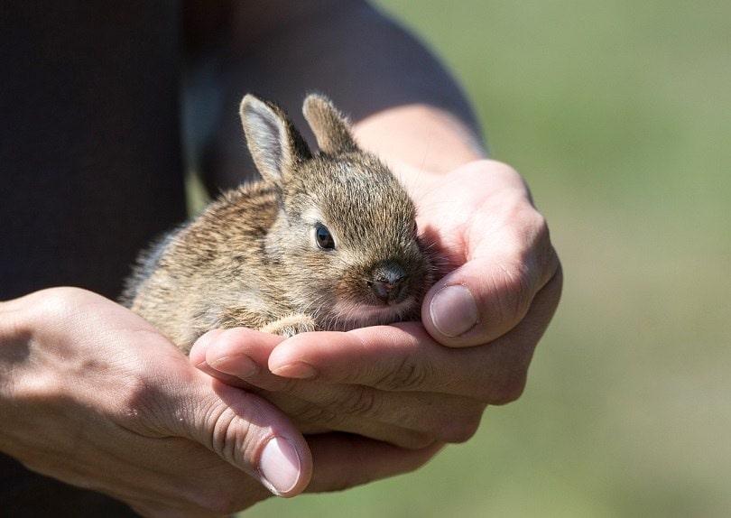 rabbit-bonding-pixabay