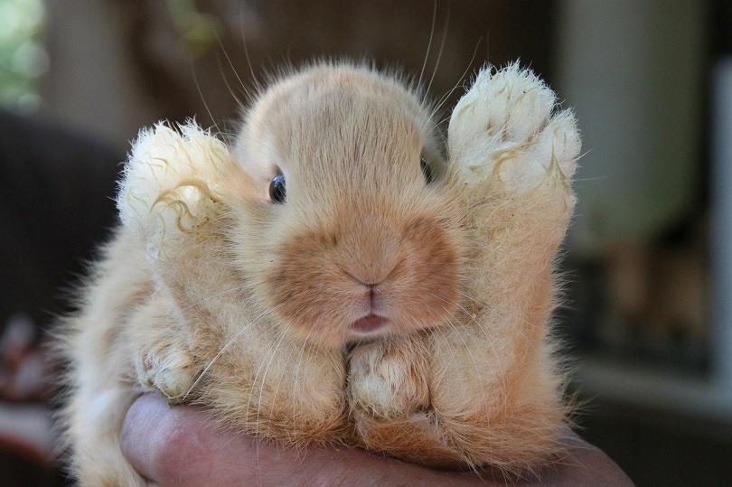 rabbit-play-pixabay