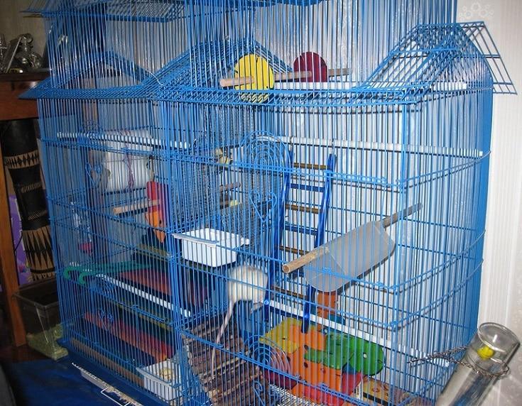 rat cage levels