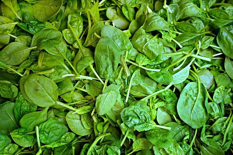 spinach-pixabay (3)