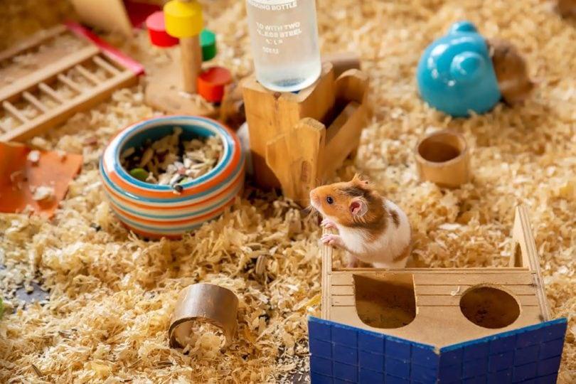 syrian hamster inside cage_FUN FUN PHOTO, Shutterstocke
