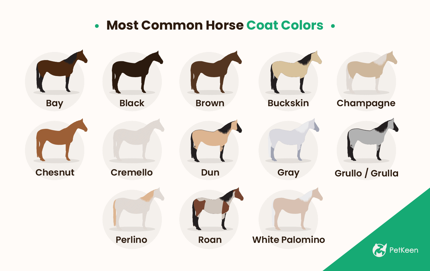 Most common horse coat colors
