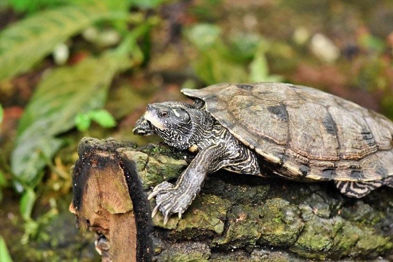 a turtle on a log_Capri23auto, Pixabay