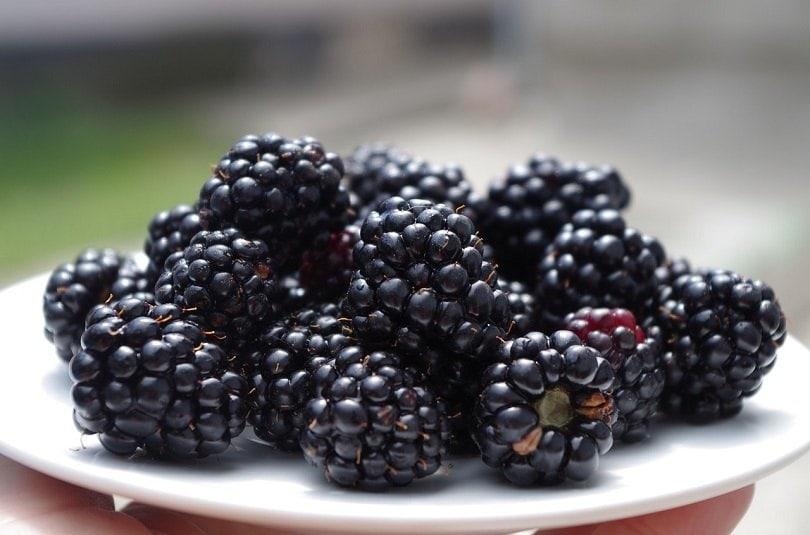 blackberries-pixabay