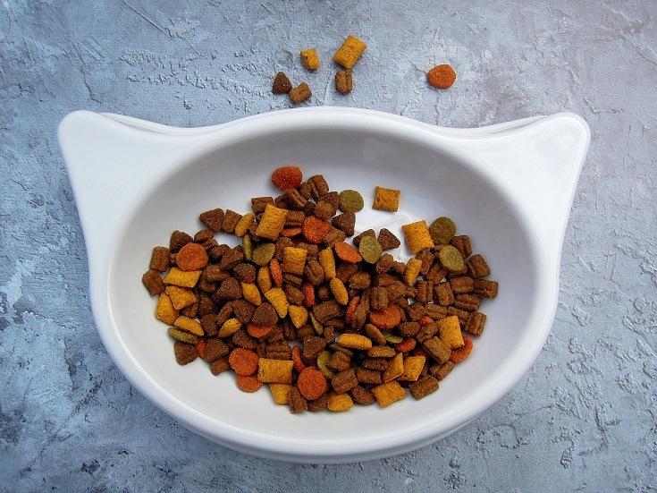 cat food on bowl