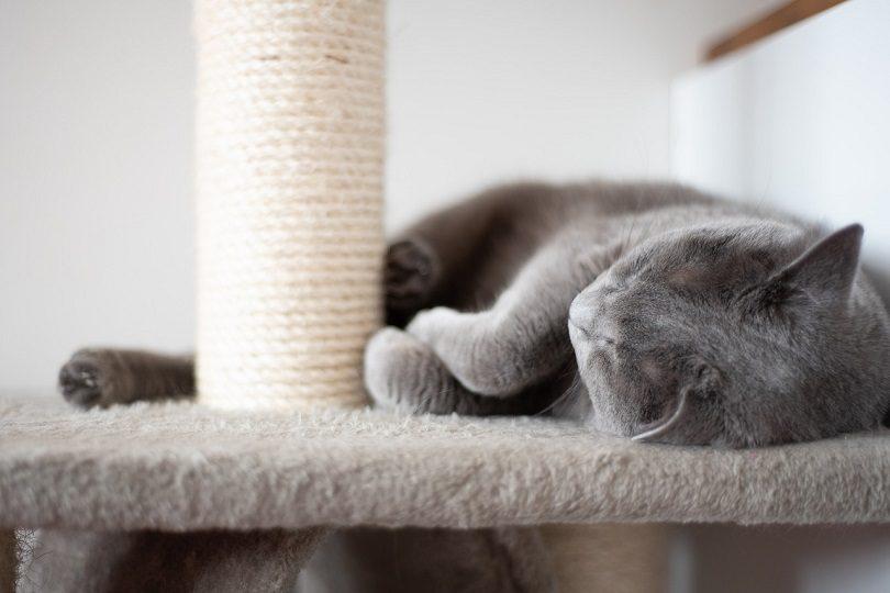 cat sleep-pixabay