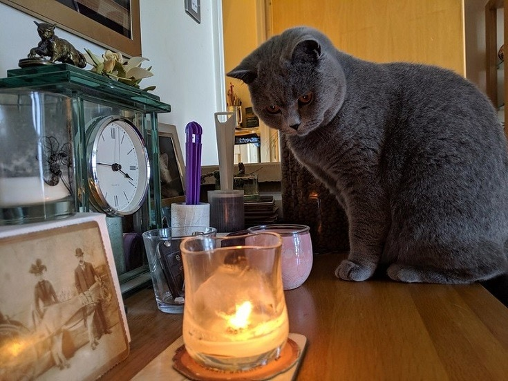 cat staring at candle