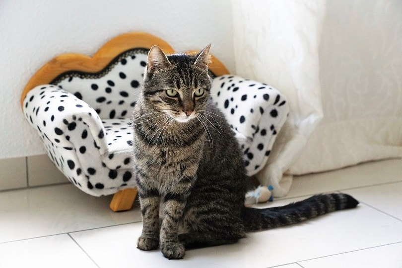 cat with couch-pixabay