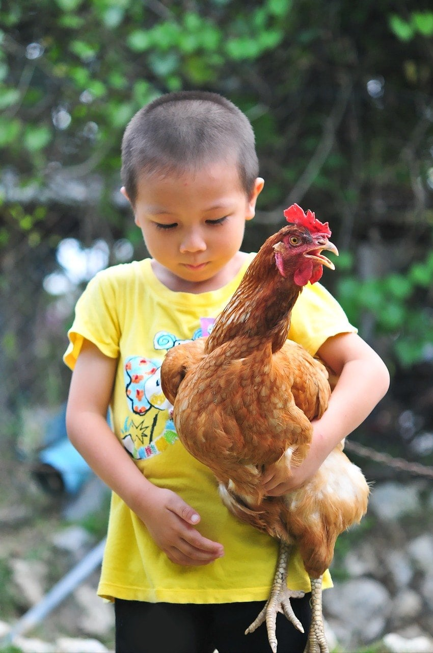 child carrying a chicken