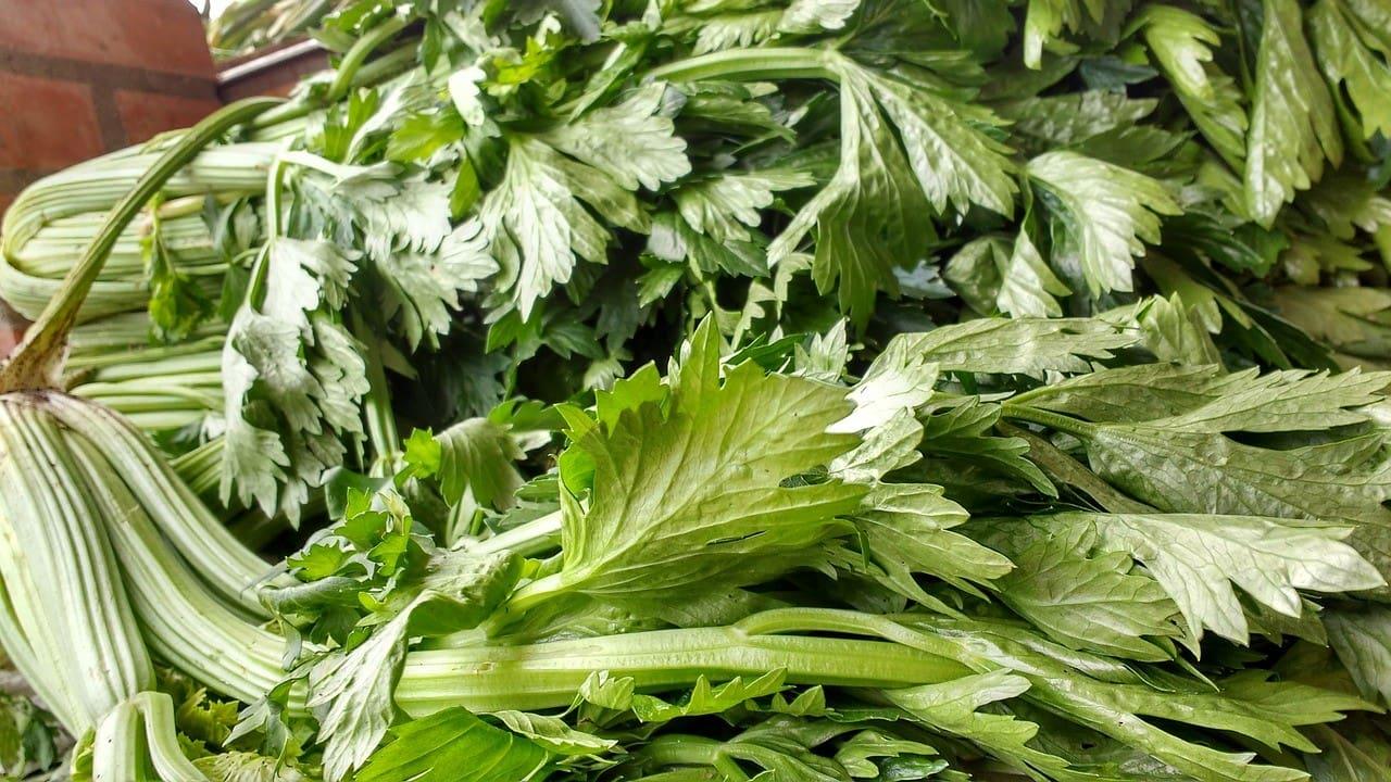 close up celery