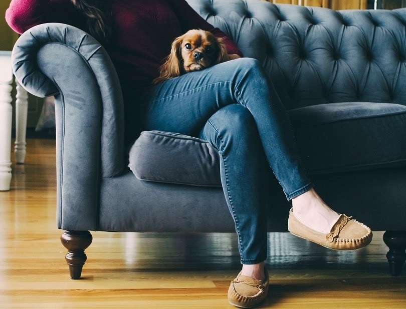 couch with pet-pixabay