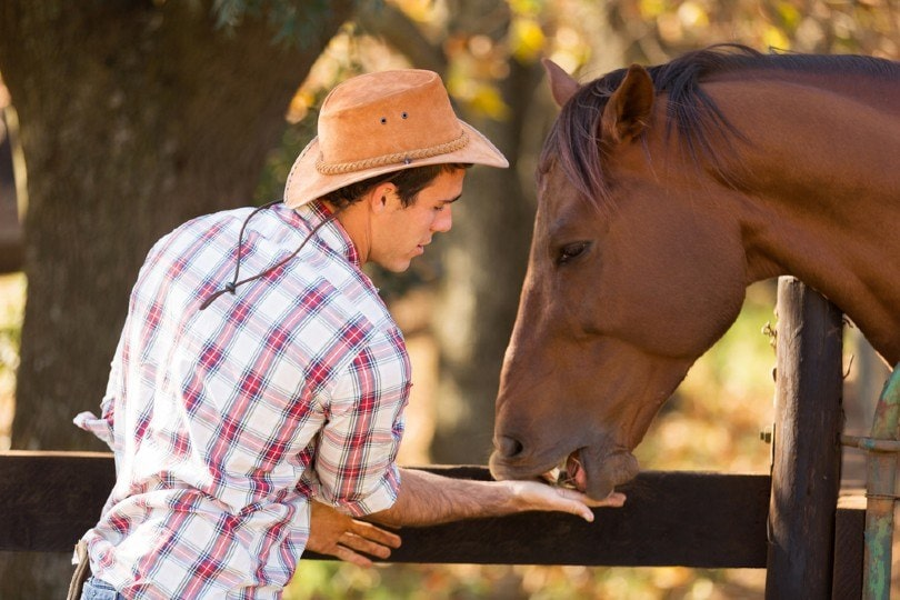 cowboy feeding a horse out of hand