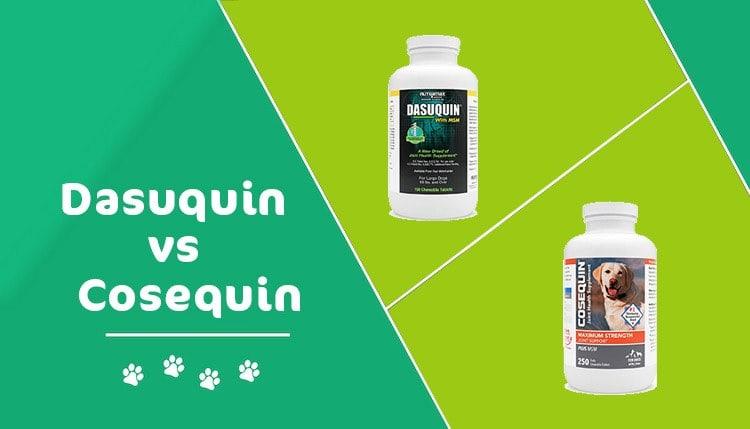 dasquin vs Cosequin header