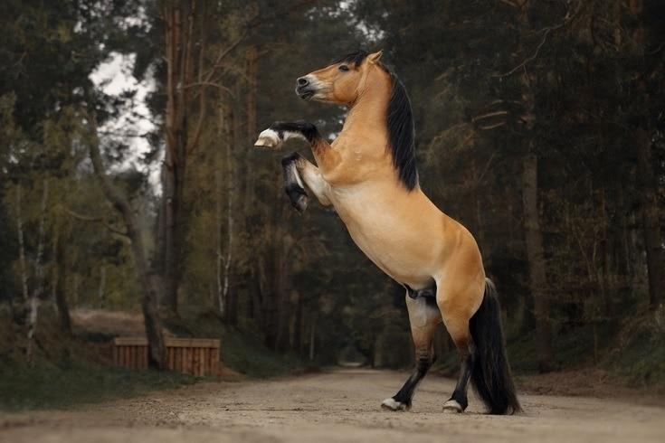 dun colored horse_Shutterstock_Julia Siomuha