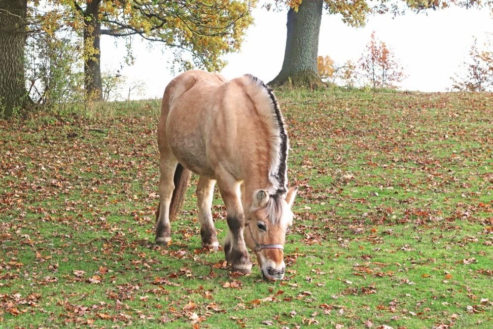dun horse dorsal