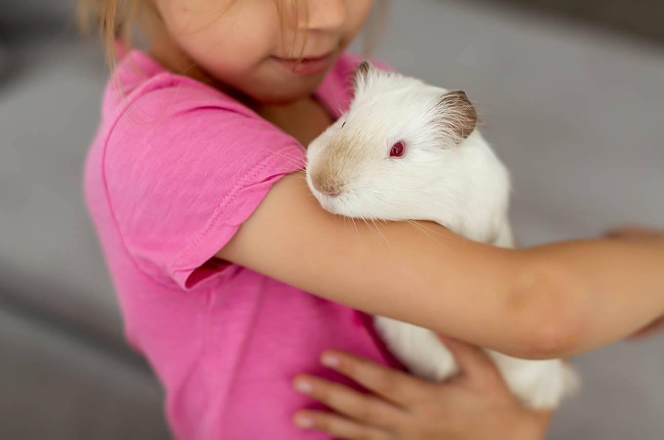 guinea pig licking girl's arm