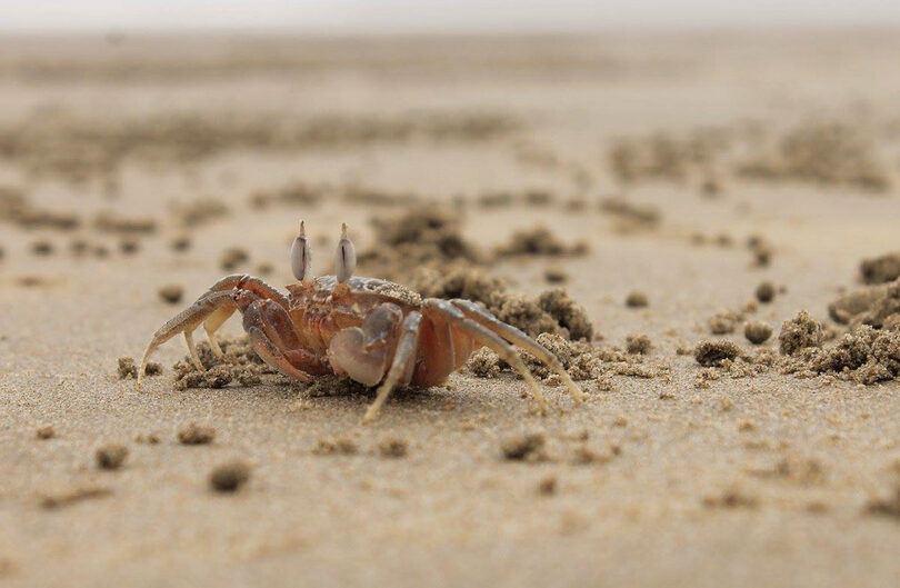 halloween moon crab-pixnio