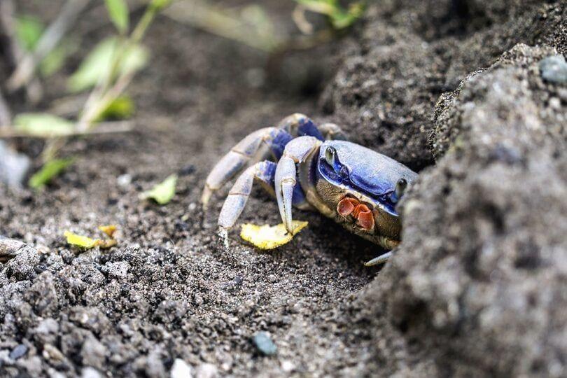 halloween moon crab-pixnio3