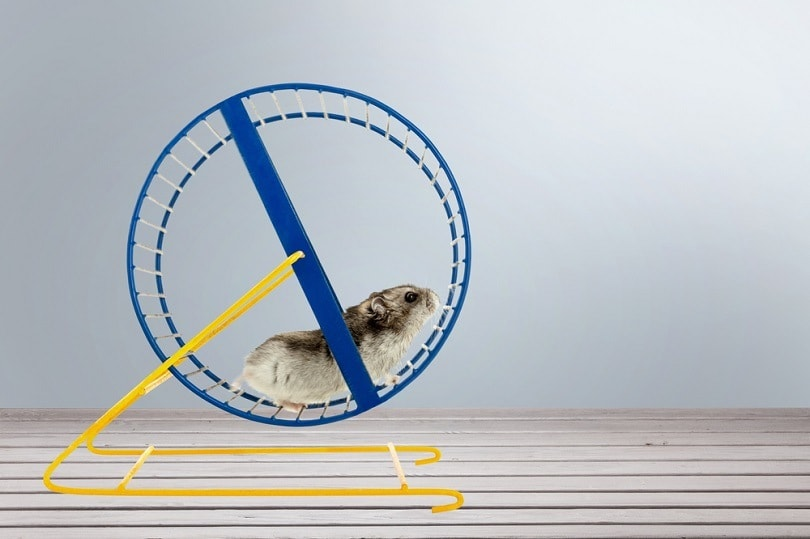 hamster-running-in-circle_Billion-Photos_shutterstock