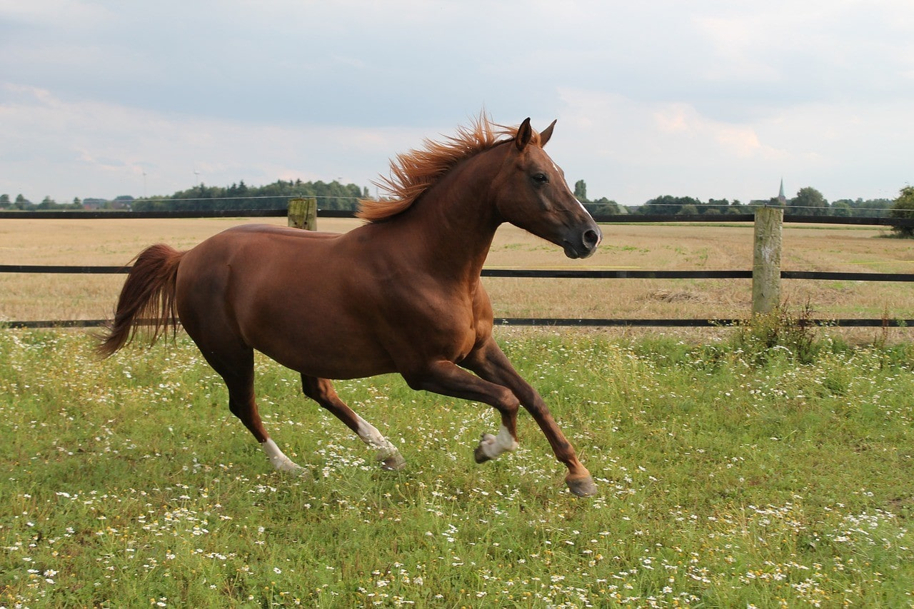 horse galloping in the pasture