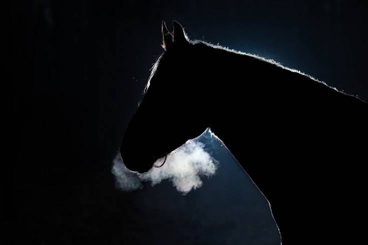 horse in the cold night