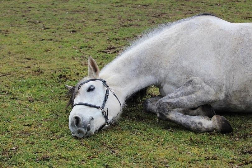 horse-pixabay3