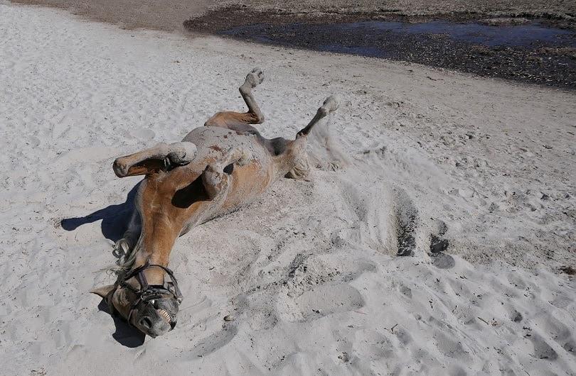 horse-pixabay4