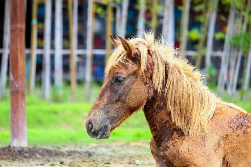 horse rain rot