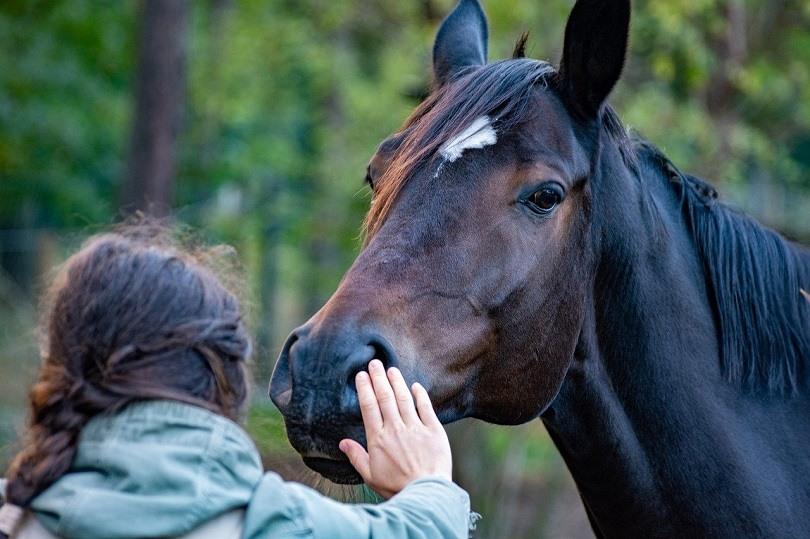 horse-wal_172619-pixabay