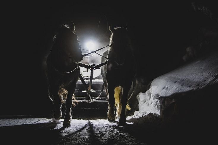 horses on snow at night