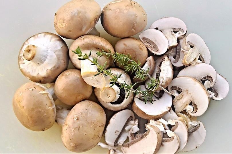 mushrooms-pixabay