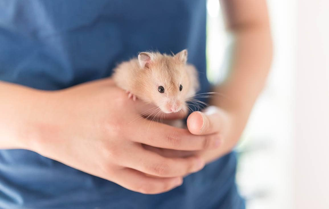 person holding a hamster